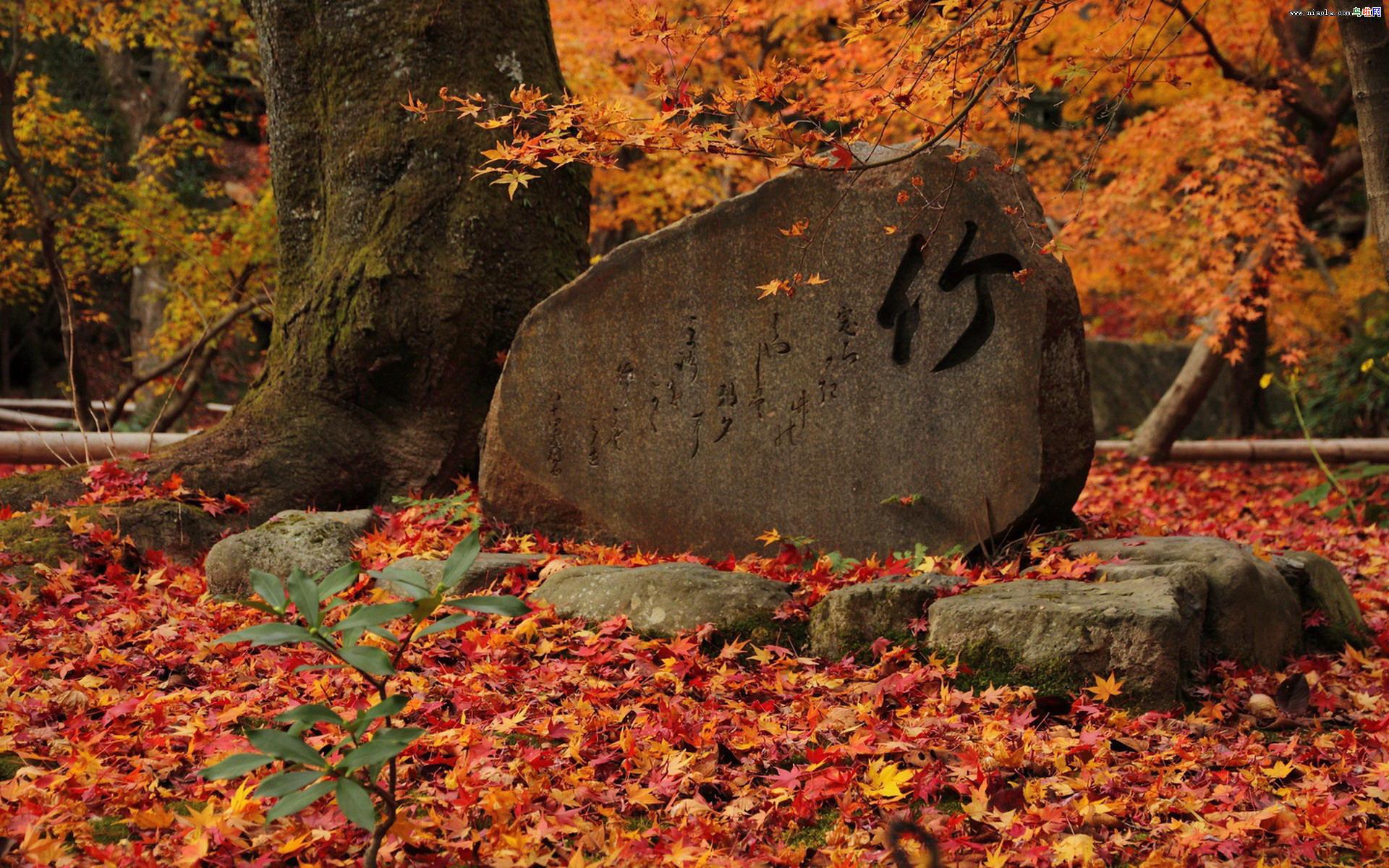 枫叶红叶满地风景桌面壁纸(12/15)