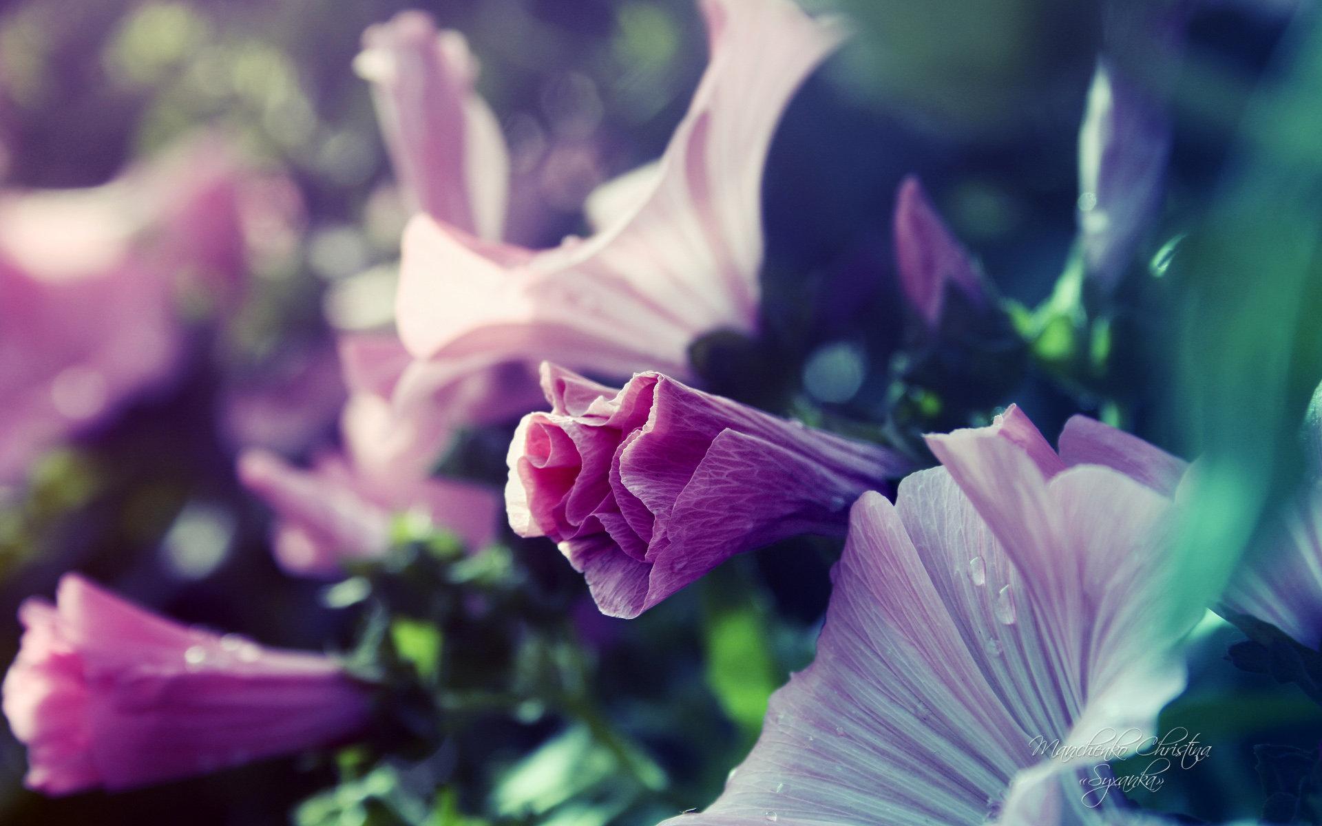 win8唯美梦幻花园植物唯美桌面壁纸图片