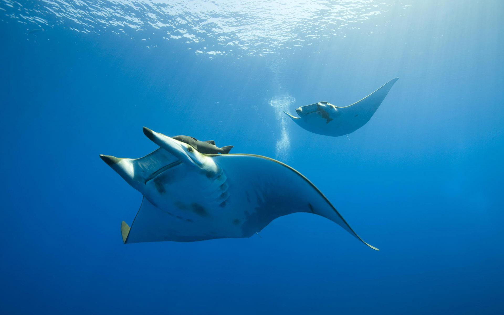 风景;海底世界