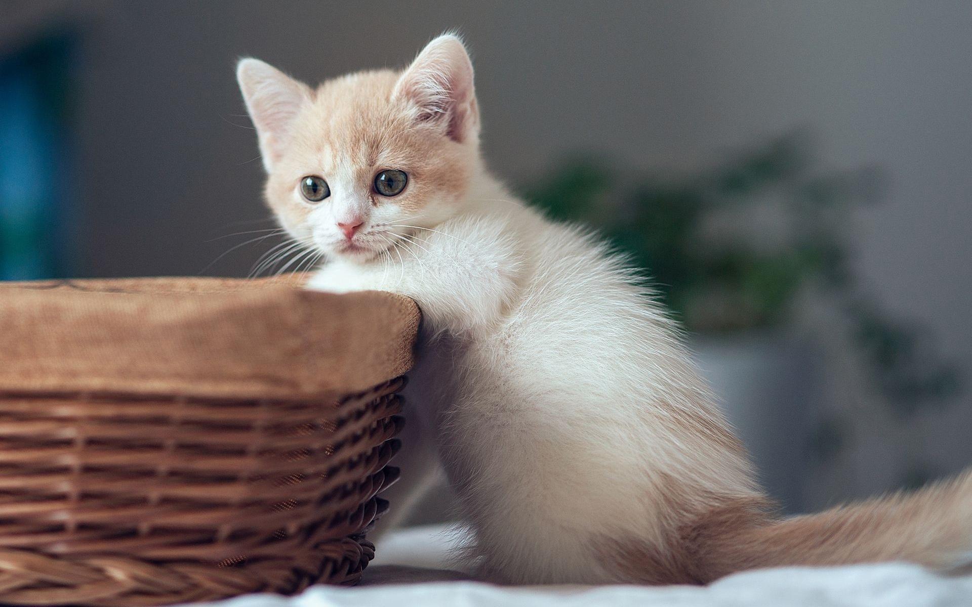 【高清图】可爱小花猫高清桌面壁纸