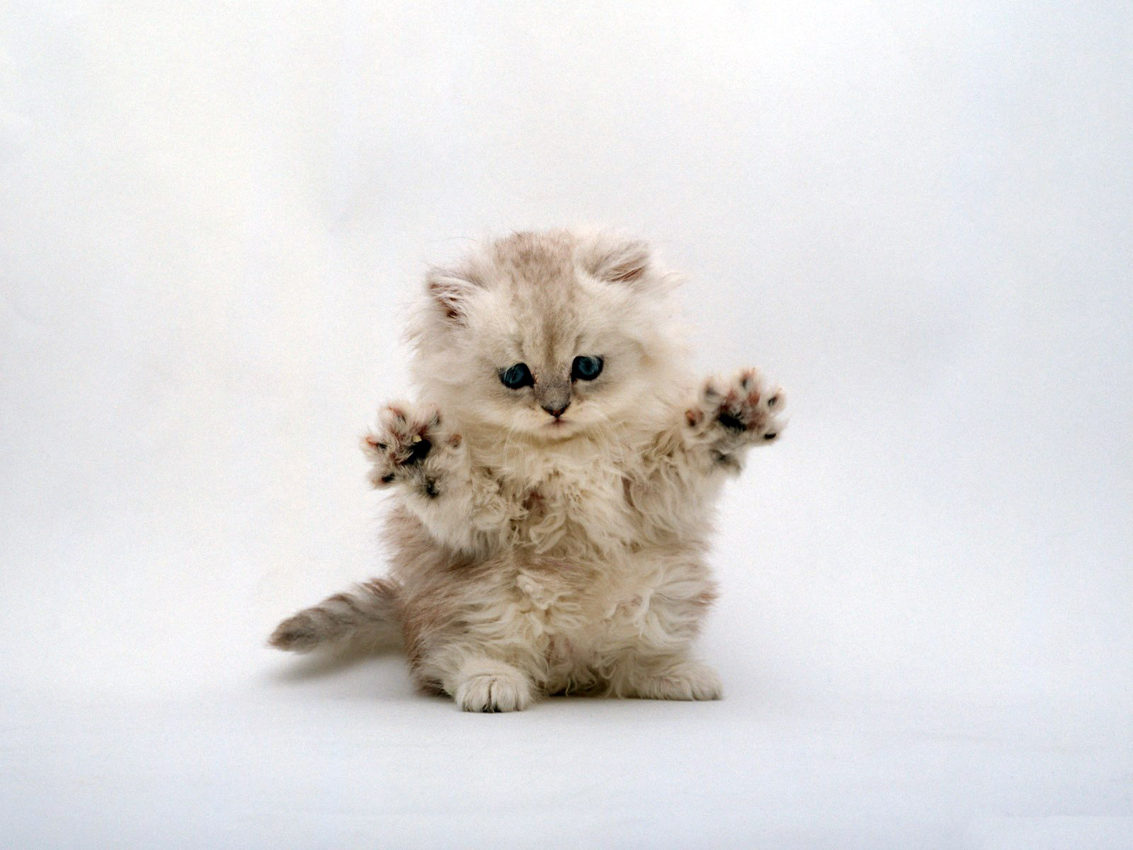 我是你可爱的小猫近照