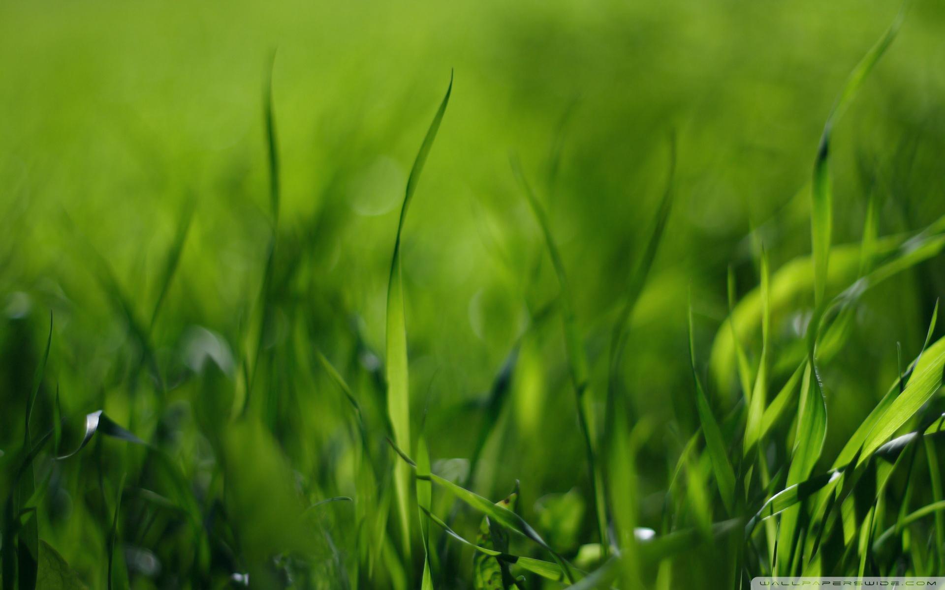 大自然绿色的美景桌面壁纸(13/13)