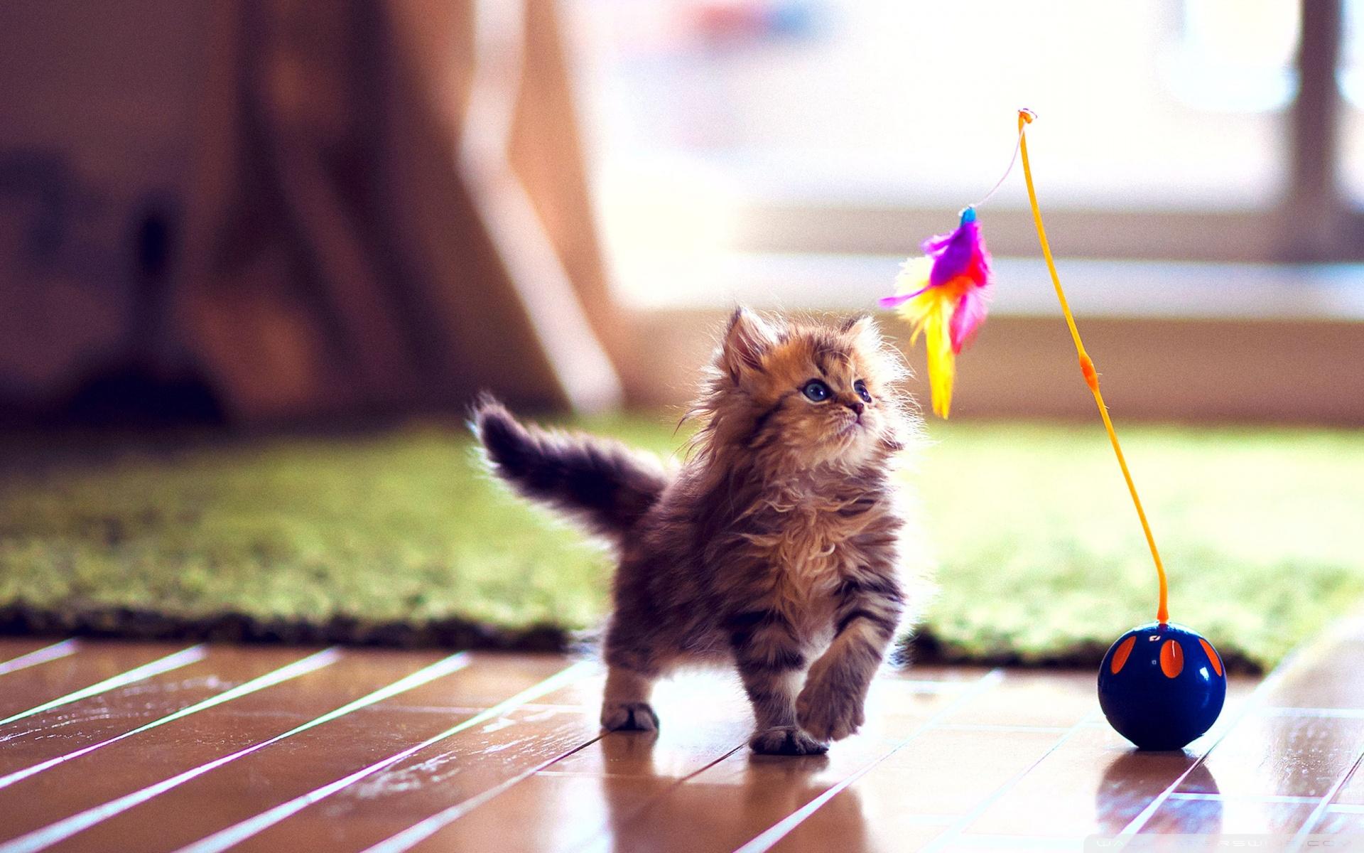 10 Top Cute Wild Animal Wallpaper Full Hd 1080p For Pc: 电脑桌面壁纸可爱萌宠_电脑桌面壁纸可爱萌宠画法
