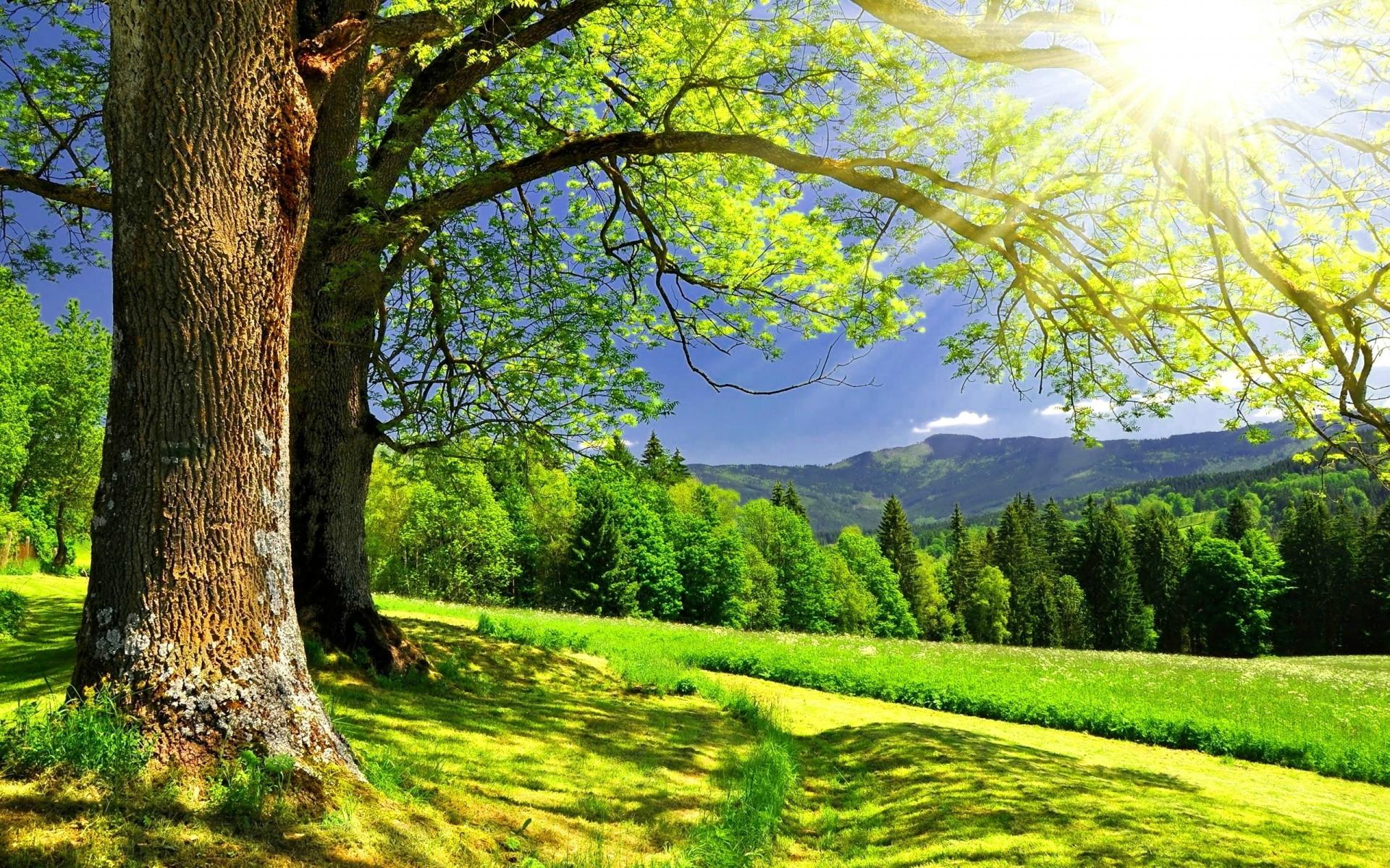 清新的自然美景电脑壁纸图片