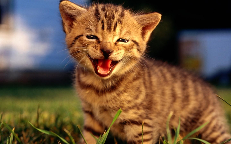 【高清图】可爱萌宠猫咪电脑壁纸