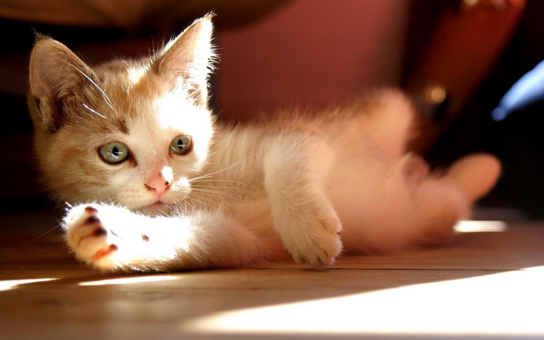 可爱的猫咪电脑壁纸win7壁纸 精美壁纸 高清壁纸 护眼桌面.