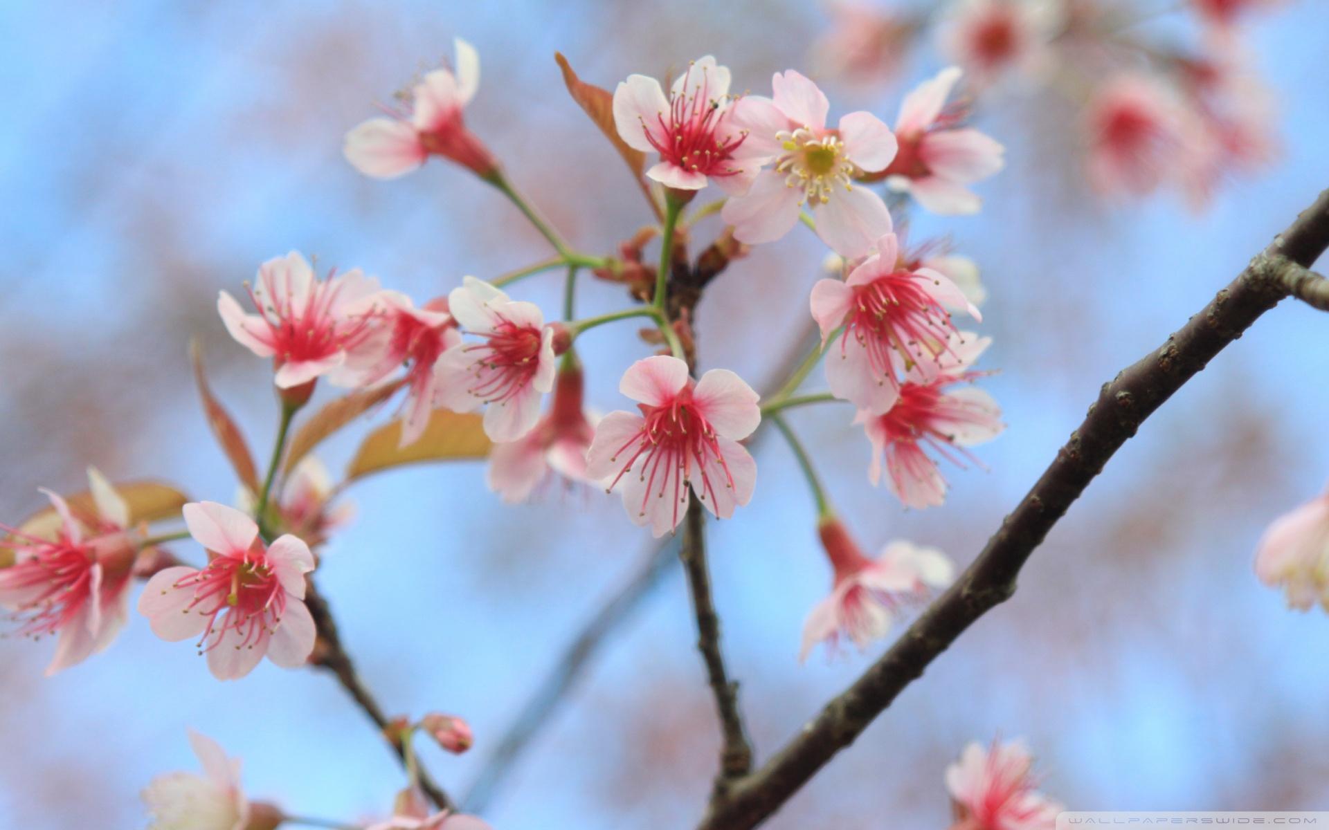 花朵壁纸高清风景图片