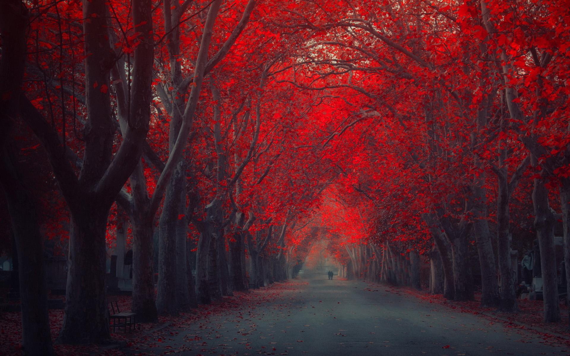 red moon nice - photo #25
