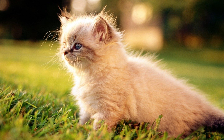 可爱动物猫桌面壁纸