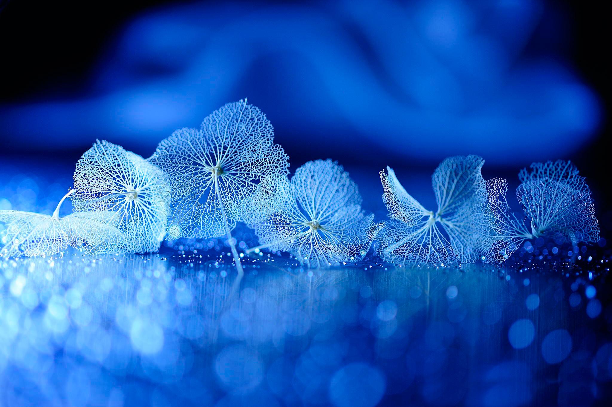 on leaf blue - photo #7