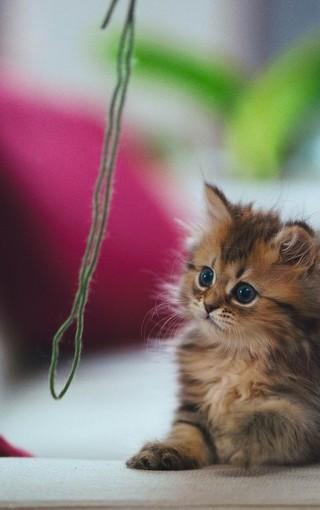 可爱的猫咪超萌壁纸