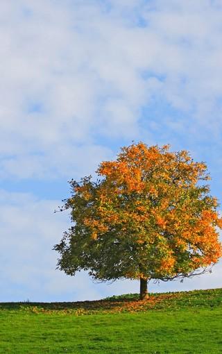 一年四季自然风景壁纸 第10页-zol手机壁纸