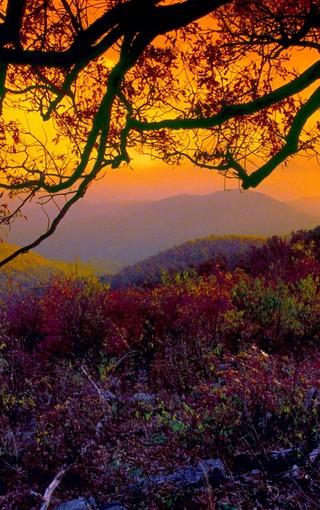 秋天的树林自然风景壁纸 第3页-zol手机壁纸
