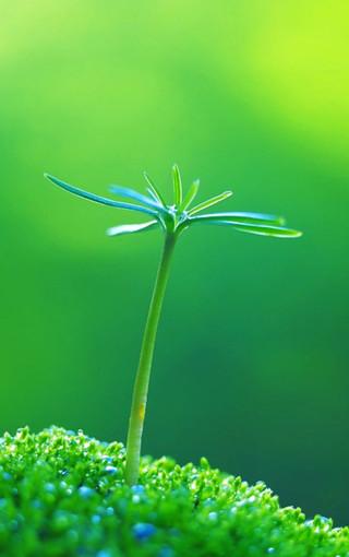 绿色 绿色植物 嫩芽 嫩叶 新芽 植物 桌面 320_510 竖版 竖屏 手机