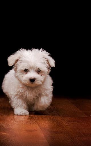 可爱的小狗高清壁纸