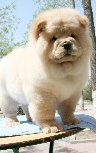 可爱狗狗高清壁纸精选
