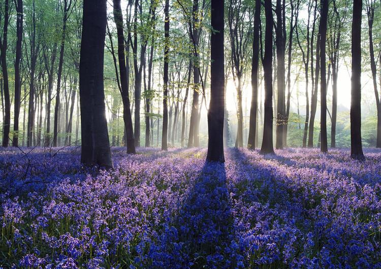 森林高清精美壁纸