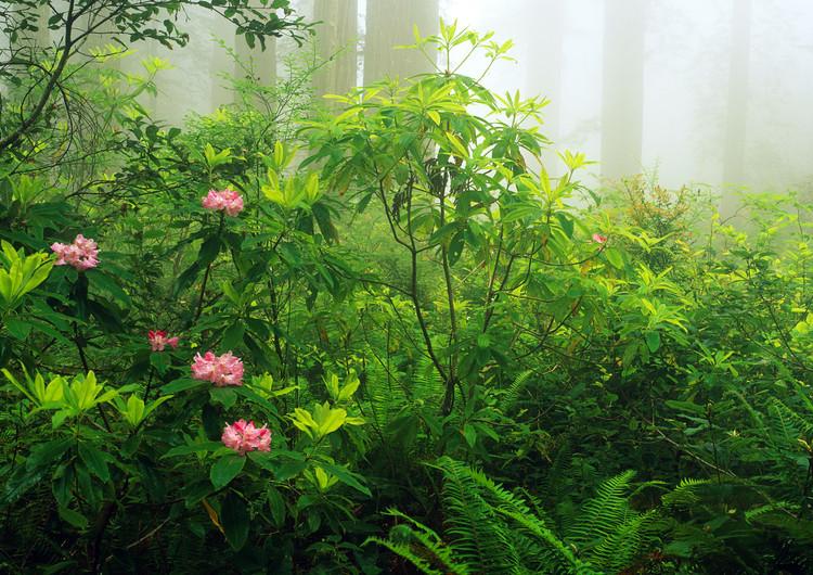 森林高清精美壁纸图片