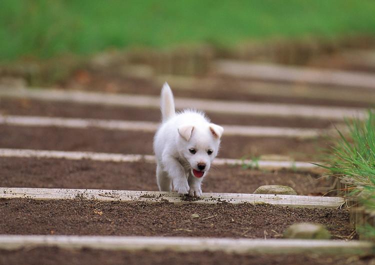 可爱狗狗卖萌手机壁纸