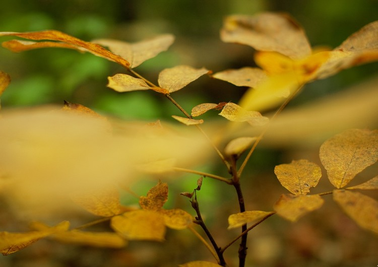 大尺寸自然风景秋叶壁纸 第4页-zol手机壁纸