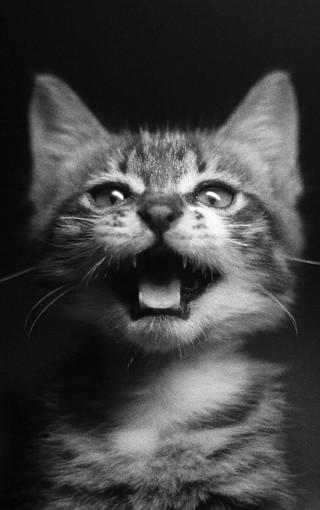 可爱的小猫iphone4s手机壁纸