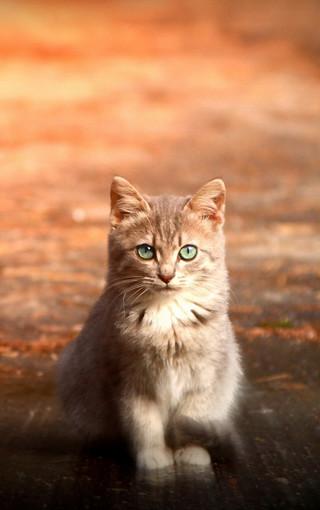 可爱猫咪手机壁纸下载