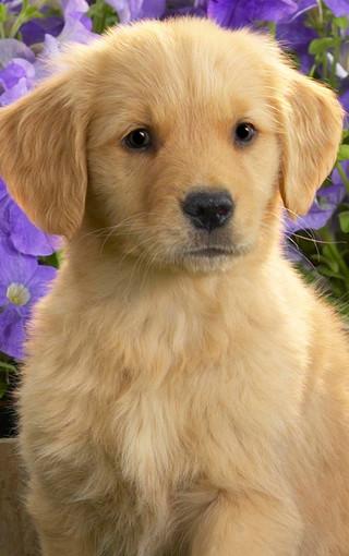 可爱狗狗手机壁纸下载