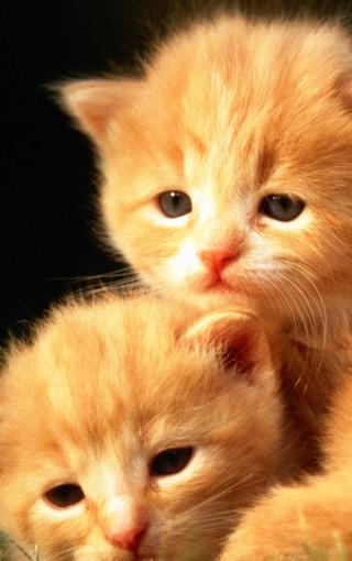 动物壁纸 可爱猫咪手机壁纸下载
