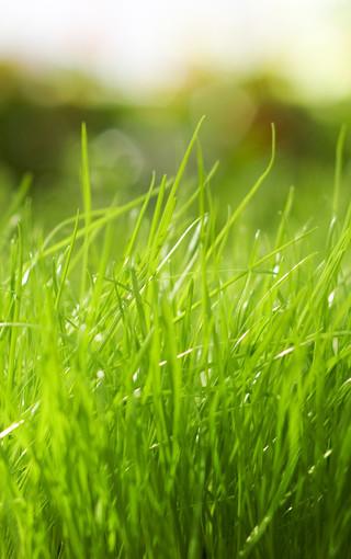 綠色的植物手機壁紙下載