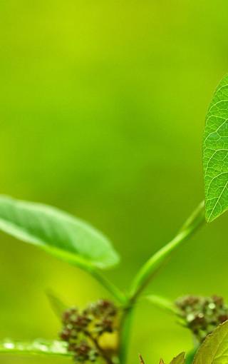 绿色的植物手机壁纸下载