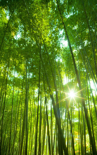 森林风光手机桌面壁纸