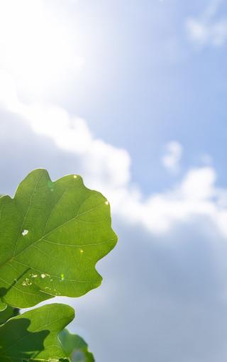 美丽的植物手机壁纸下载