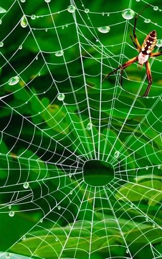 壁纸 草 绿色 植物 桌面 320_510 竖版 竖屏 手机