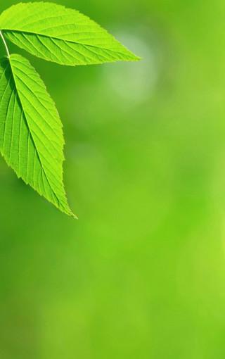 护眼的植物高清手机壁纸
