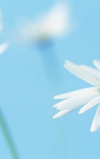 唯美温馨植物特写手机壁纸