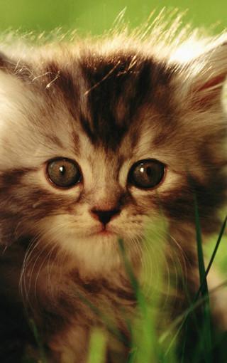 憨厚可爱的猫咪手机壁纸