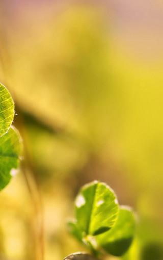 唯美高清的植物手机壁纸
