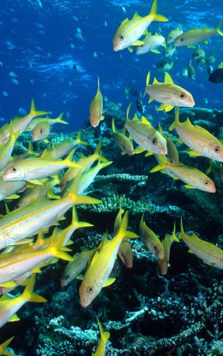 神奇的海底世界生物壁纸