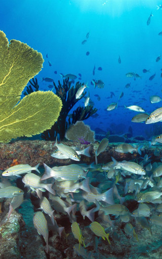 壁纸 海底 海底世界 海洋馆 水族馆 桌面 320_510 竖版 竖屏 手机