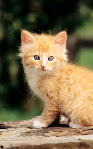 可爱小花猫高清手机壁纸