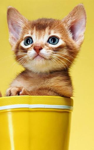 动物壁纸 可爱小花猫高清手机壁纸