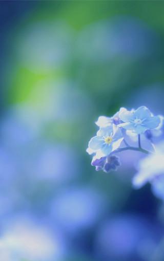 壁纸 手机 美景/植物美景大屏手机壁纸 (5/14)