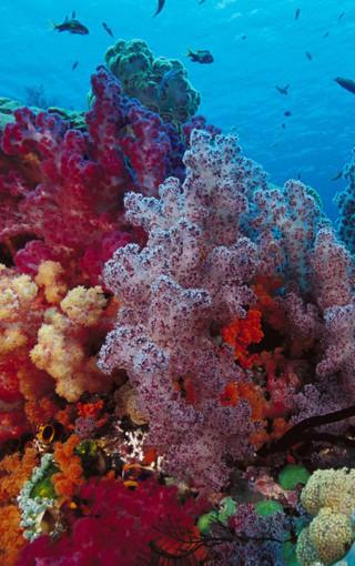 海底世界奇幻手机壁纸