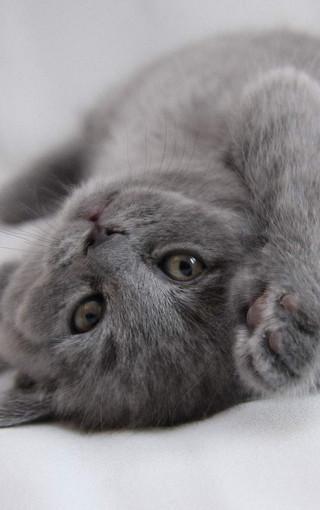 可爱的猫咪安卓手机壁纸