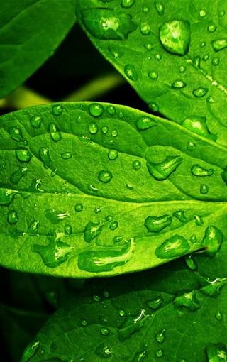绿色植物唯美手机壁纸