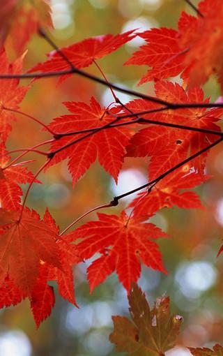 秋日红色主题风景高清壁纸