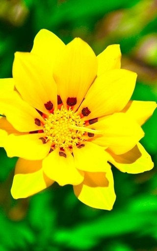 高清花朵图片 手机壁纸花朵图片高清 美丽花朵图片