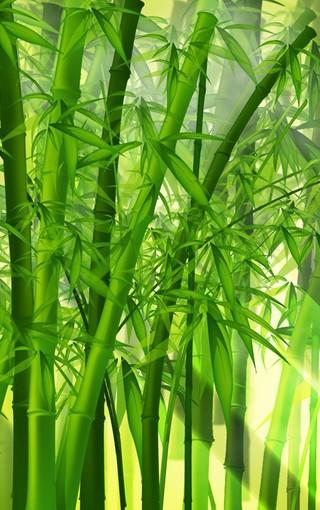 绿色养眼高清手机壁纸