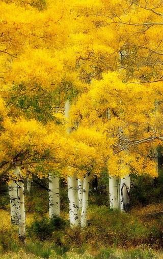 自然美景宽屏手机壁纸