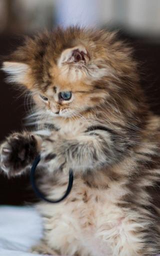 动物壁纸 可爱的萌猫手机壁纸